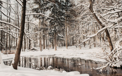 Weißer Winter in Bielefeld